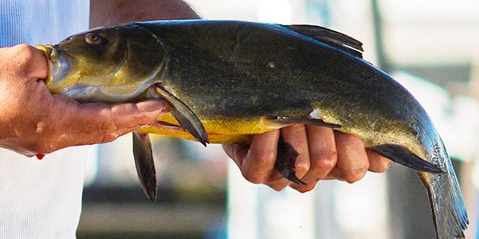Fischreichtum im Havelland
